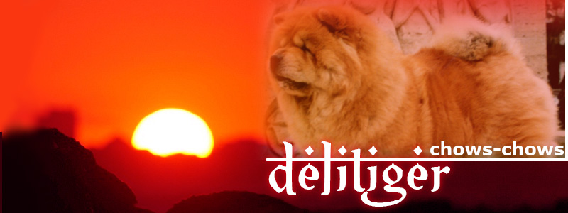 Delitiger Chows